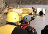 Animal Rescue in Action